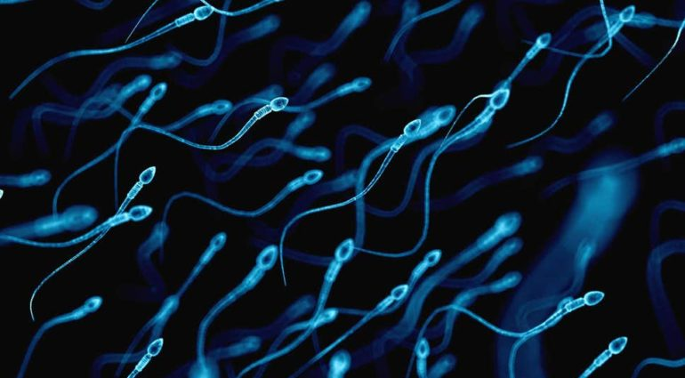 Sperm counts in the West plunge by 60% in 40 years as 'modern life' damages men's health